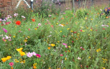 Wild flower garden at Plumley Station